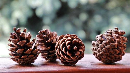 cones  forest  nature