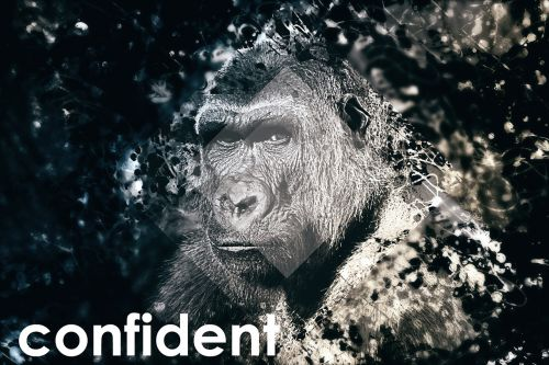 confident self-conscious gorilla