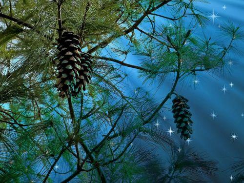 conifer starry sky pine