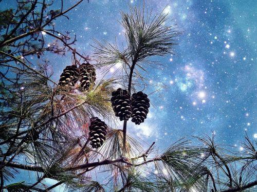 conifer pine starry sky