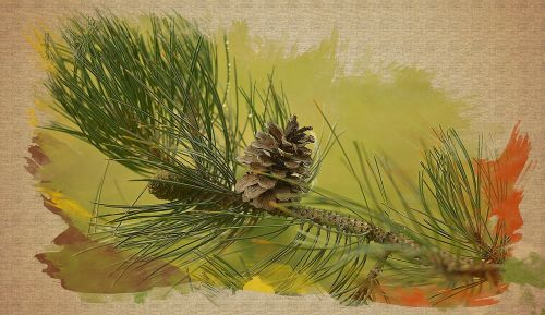 coniferous branch needles nature
