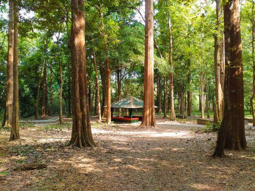 conolly's plot teak plantation forest