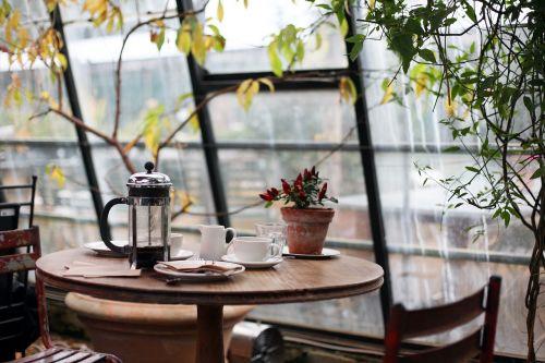 conservatory coffee plants