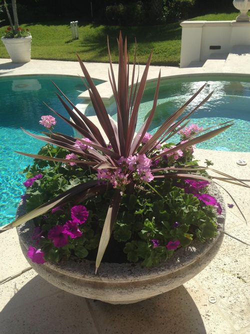 container garden poolside beautiful