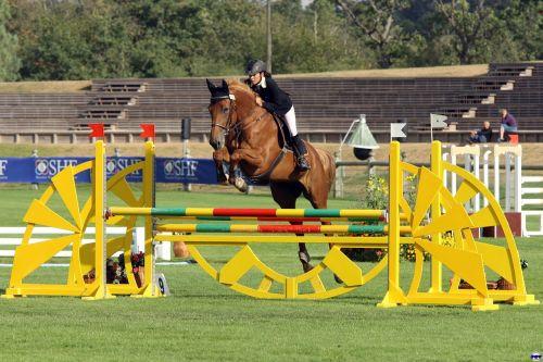 contest equestrian horse
