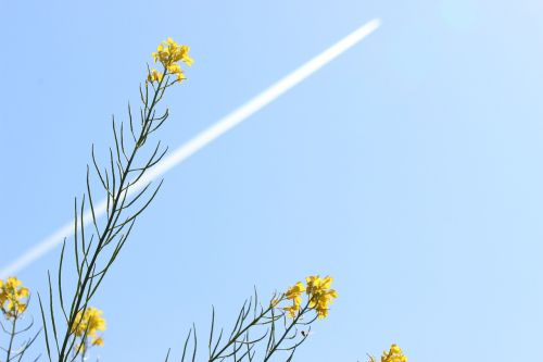 contrail blue sky straight line