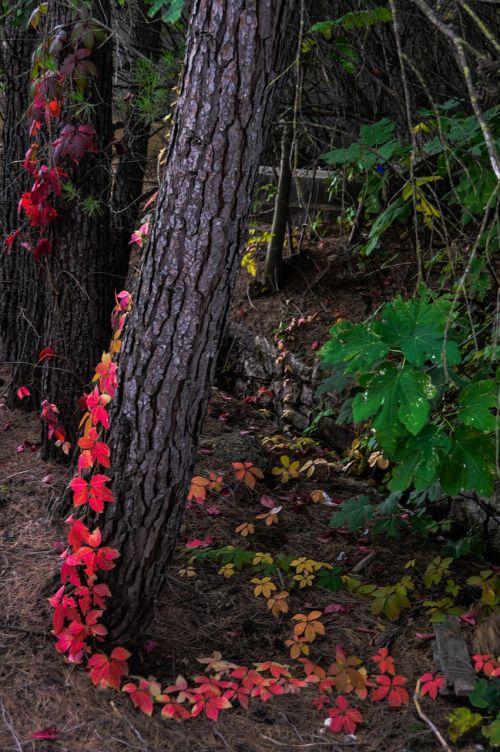 contrast vegetation color