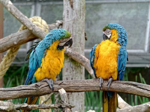 conversation birds chat