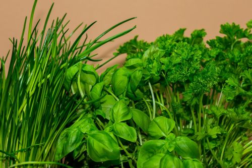 cook herbs culinary herbs