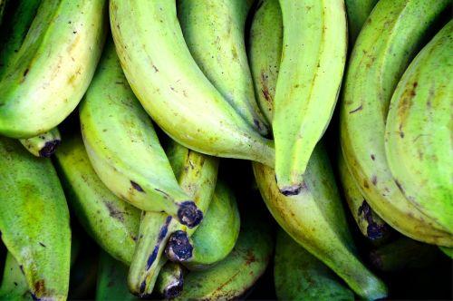 cooking bananas bananas green