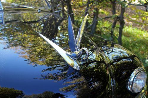 cool figure swan symbol