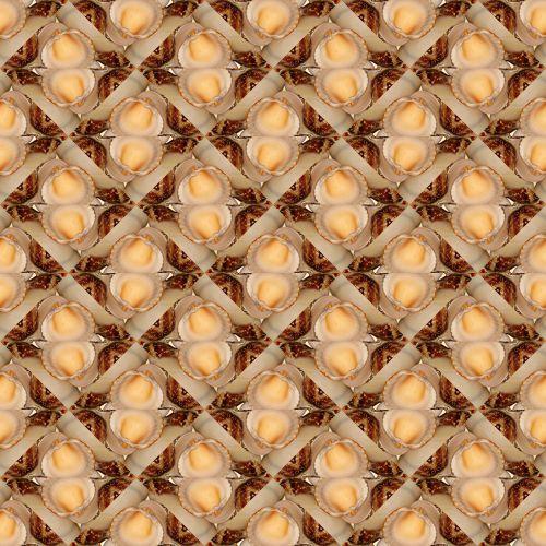 Seashells # 2