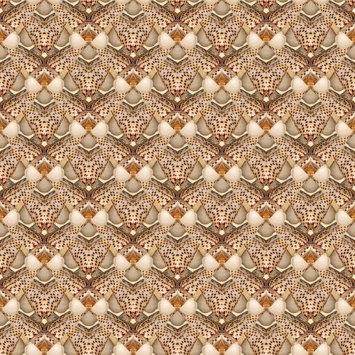Seashells # 5