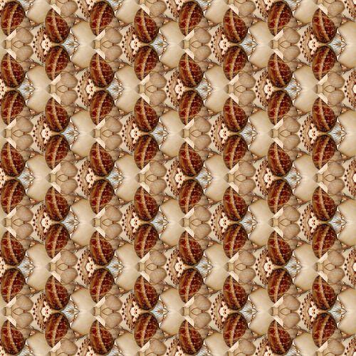 Seashells # 6