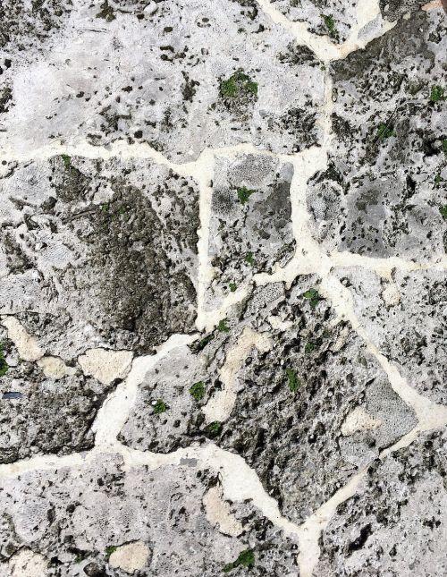 coquina shell limestone