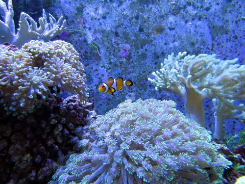 coral coral reef white dunga lee