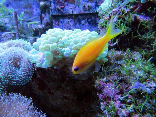 coral coral reef tropical fish