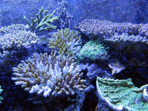 coral coral reef underwater creatures