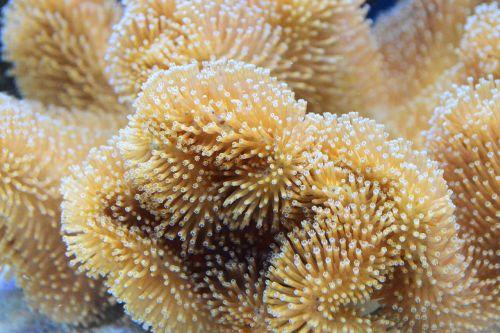 coral reef toadstool