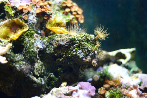 coral sea underwater