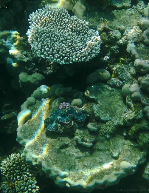 coral underwater photography underwater