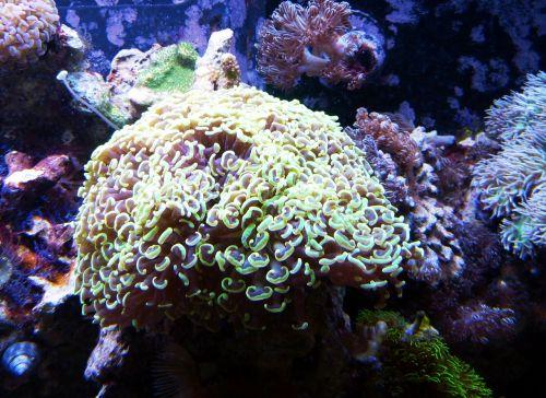 coral underwater ocean