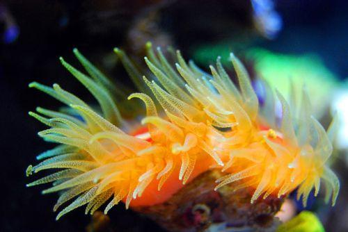 coral reef tentacle