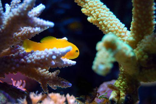coral reef sea