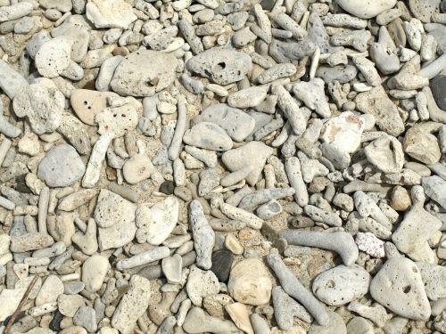 coral coral stones beach