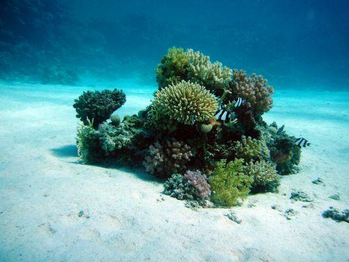 coral underwater oasis ocean floor