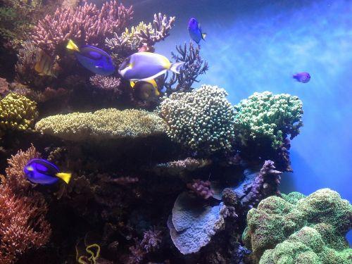 coral reef corals aquarium