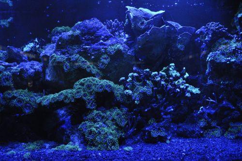 coral reef sea blue