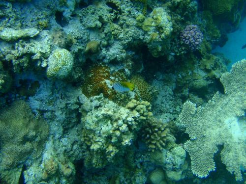 coral reefs okinawa sea