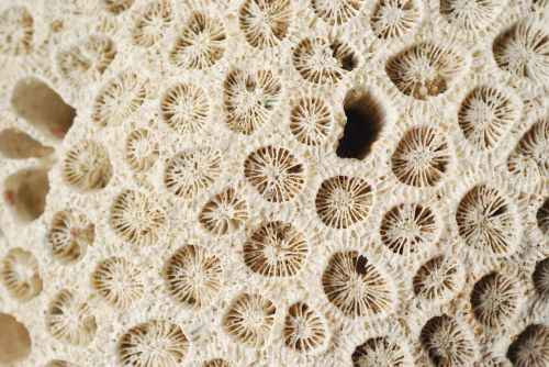 corals sea ecosystem