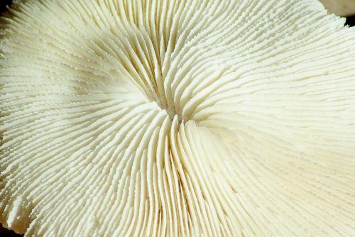 corals nest of shark ocean