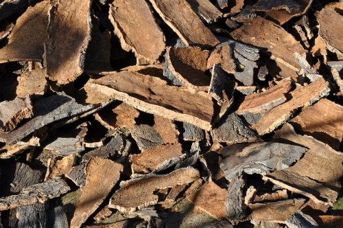 cork oak cork tree bark