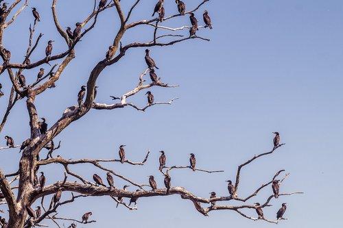 cormorant  tree  water bird sanctuary