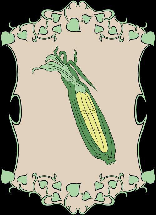 corn maize garden