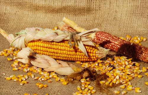 corn piston corn kernels