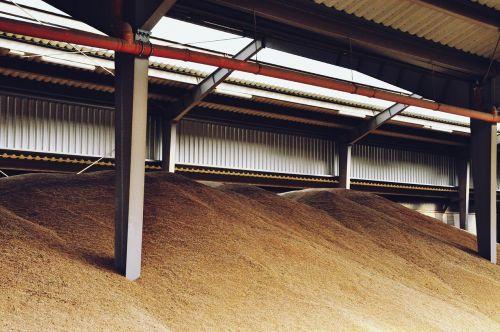 corn magazine agriculture