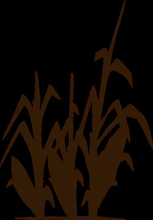 kukurūzai,kukurūzai,pasėlių,Žemdirbystė,derlius,maistas,laukas,ūkis,ūkininkavimas,ekologiškas,siluetas,nemokama vektorinė grafika