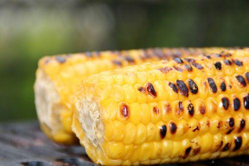 corn corn on the cob sweet corn