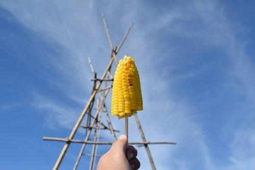 corn  food  vegetable