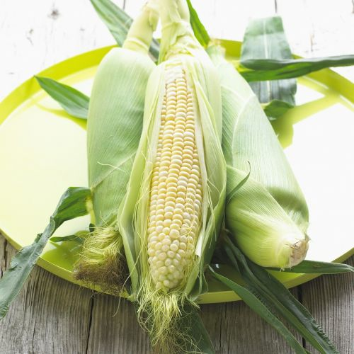 corn maize vegetable