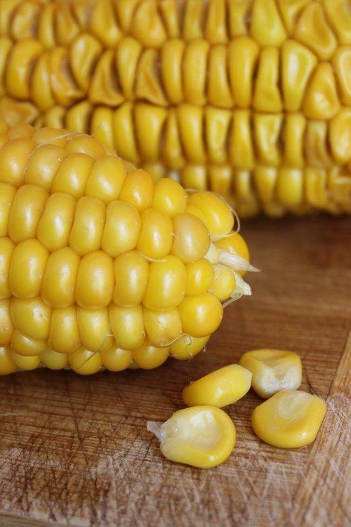 corn  close up  food