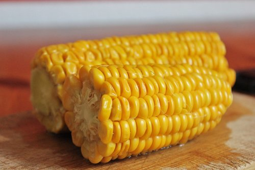 corn  close up  food
