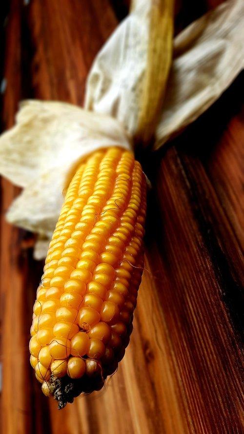 corn  corn on the cob  yellow