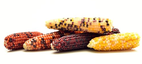 corn  ornamental corn  decoration