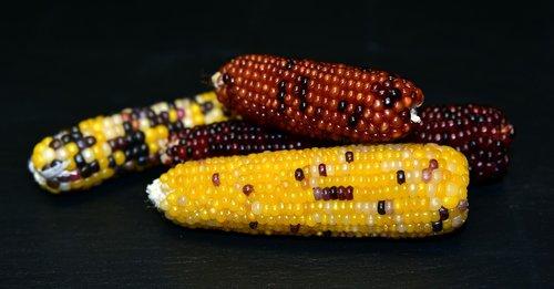 corn  ornamental corn  decoration