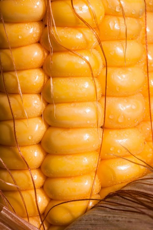 corn corn kernels corn on the cob